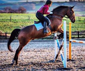 Equine Apprenticeship (Foundation level)