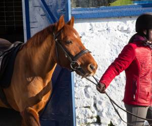Equine Apprenticeship - Horse Care & Management